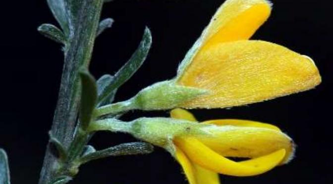 Socios del IAN-ANI descubren un nuevo taxón botánico para la ciencia