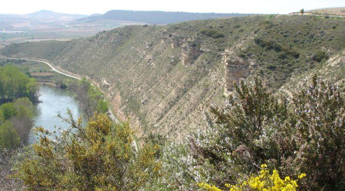 Comarcas Mediterráneas: El Valle del Ebro (Recorridos Botánicos Didácticos 2019)
