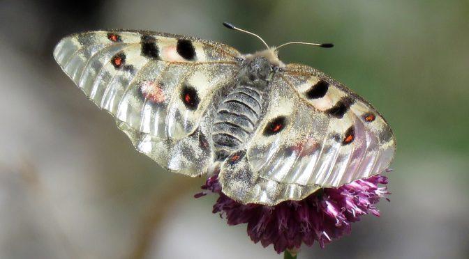 Visita a la microrreserva de mariposas de Lapoblación